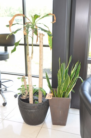 Lot-(2) Plants